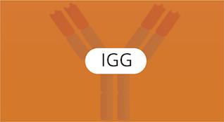 IGG-Proteínas-Específicas