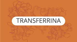 Transferrina-Proteínas-Específicas