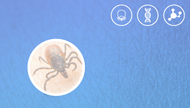 VIASURE--Tick-Borne-Diseases-Real-Time-PCR-Detection-Kit