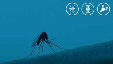dengue,-zika-y-chikungunya-viasure-kabla